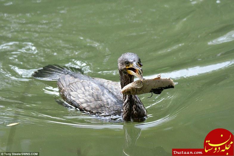 www.dustaan.com عجیب ترین روش برای ماهیگیری! +عکس