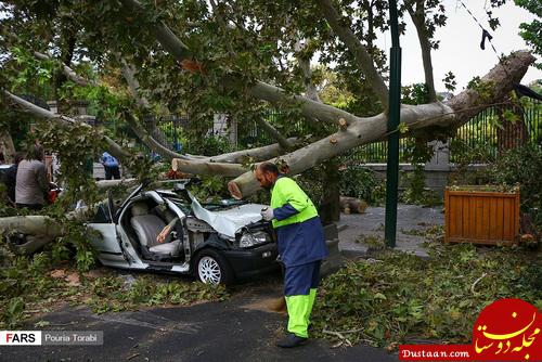 www.dustaan.com سقوط درخت درپی وزش باد شدید در تهران +عکس