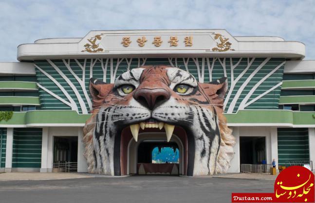 www.dustaan.com تصاویری ببینید از بدترین باغ وحش جهان!