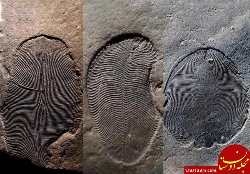 www.dustaan.com قدیمی ترین جاندار شناسایی شده در کره خاکی چند سال قدمت دارد؟ +عکس