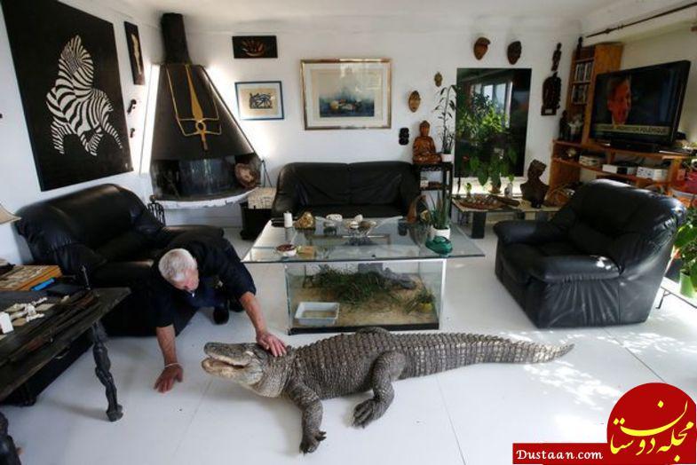 نگهداری از 400 حیوان وحشی در خانه! +عکس