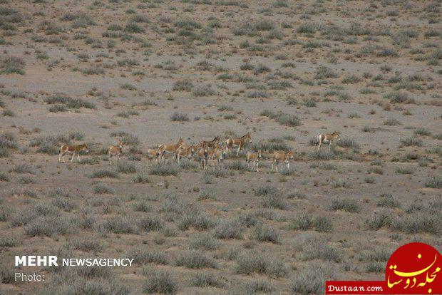 www.dustaan.com شاهکار سازمان حفاظت محیط زیست تکمیل شد!