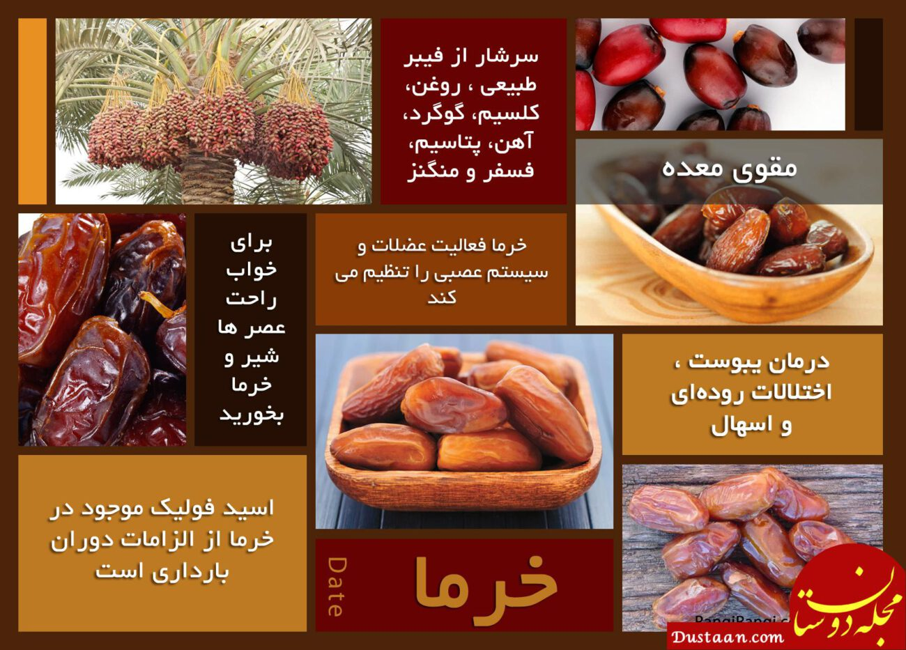 خواص خرما www.dustaan.com