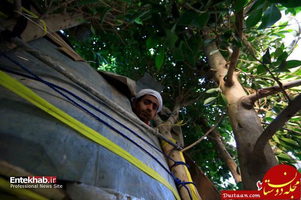 www.dustaan.com زندگی عجیب یک مرد روی درخت به دلیل فقر! +عکس