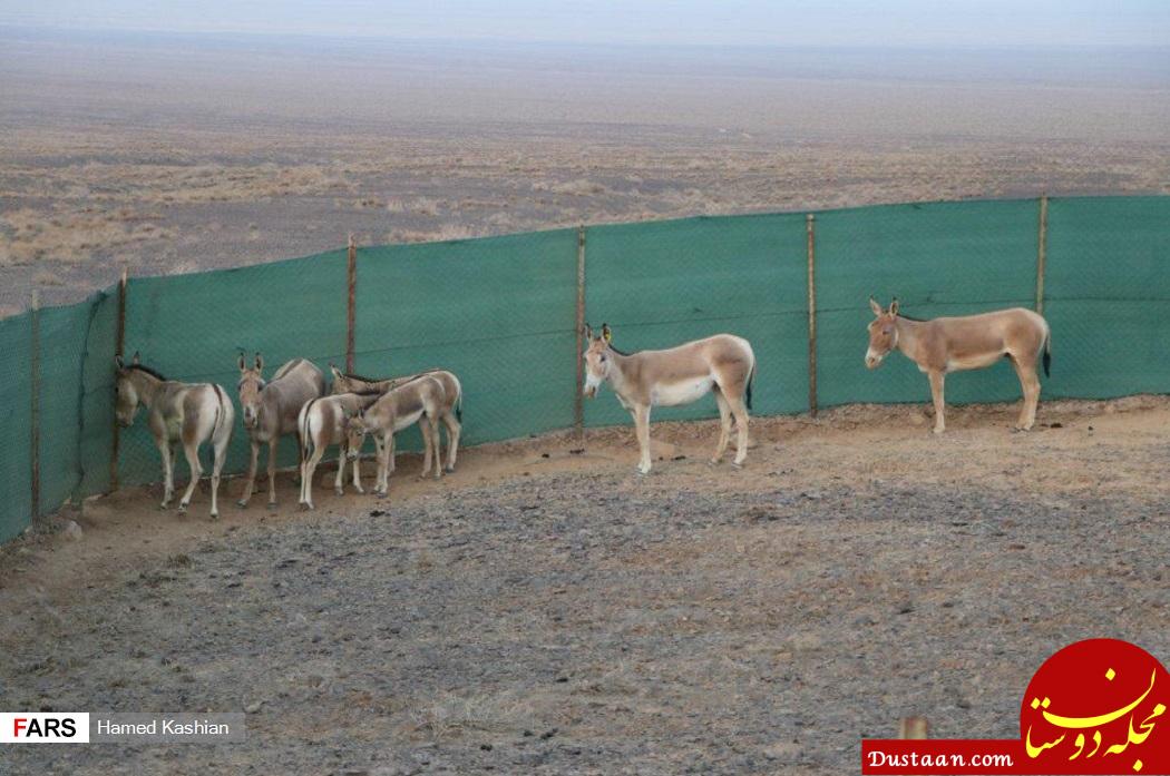 www.dustaan.com زیبای آفریقای ایران در گور بی تدبیری +تصاویر
