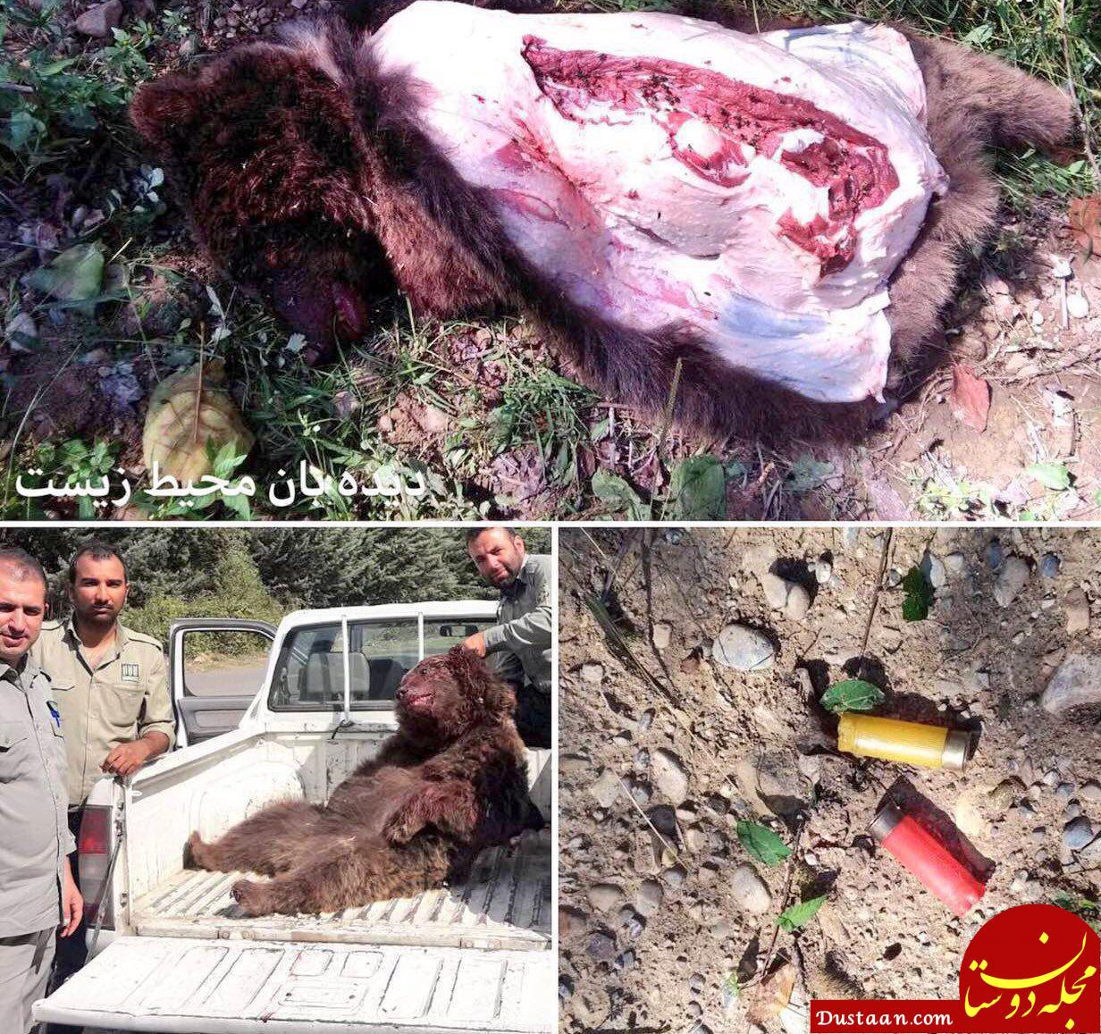 www.dustaan.com دستگیری چند نفر در حال تکه کردن این خرس برای کباب! +عکس