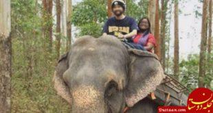 فرار استاد بدهکار به جنگل های هند سوژه شد! +عکس