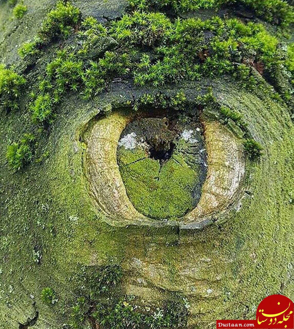 www.dustaan.com تصویری دیدنی از چشم زمین! +عکس
