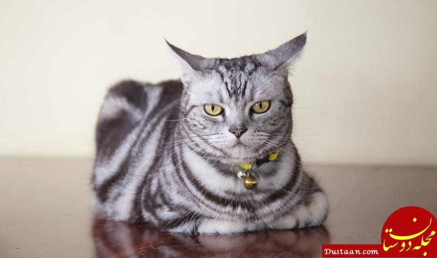 www.dustaan.com مردی که گربه او را گاز گرفت و مُرد!
