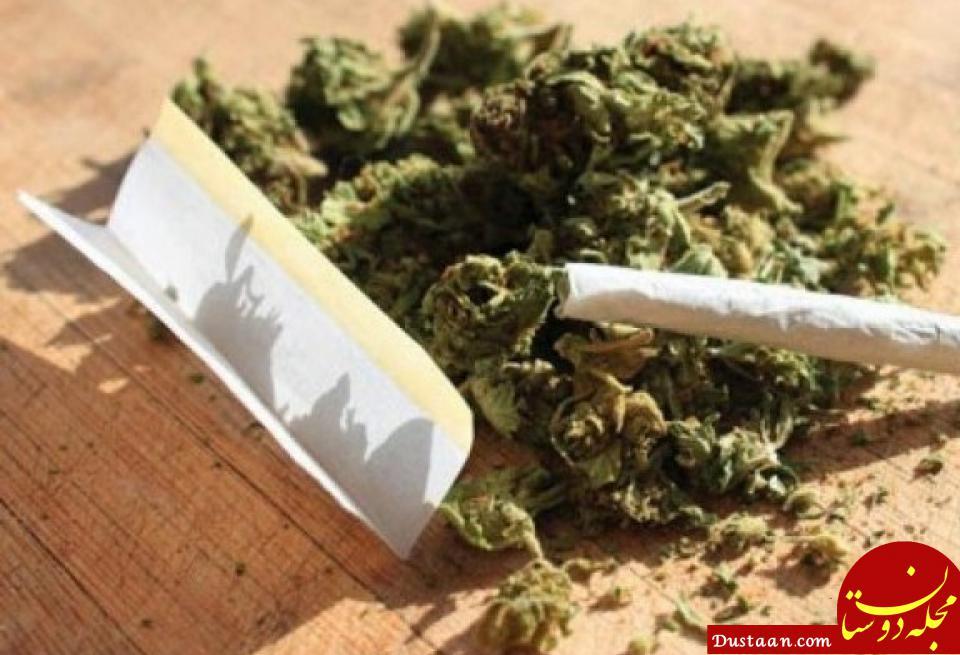 www.dustaan.com دلیل افزایش قیمت مخدر «گل» چیست؟