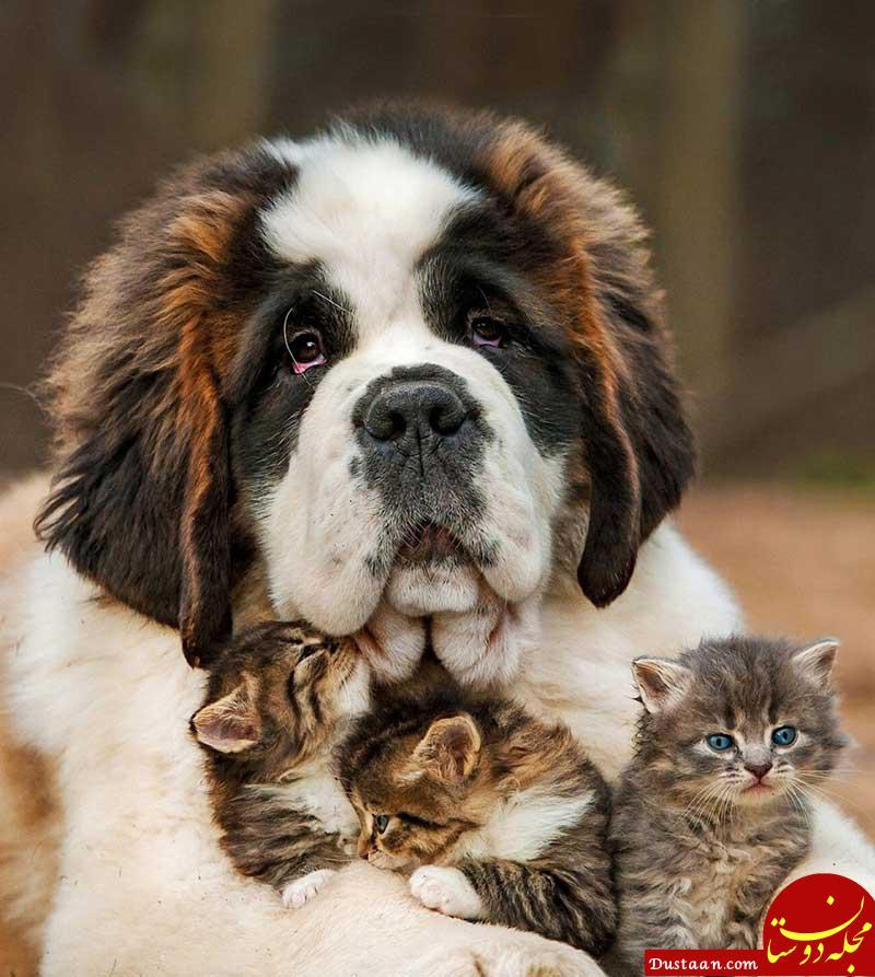 www.dustaan.com سگ و گربه نگه ندارید؛ مریض می شوید