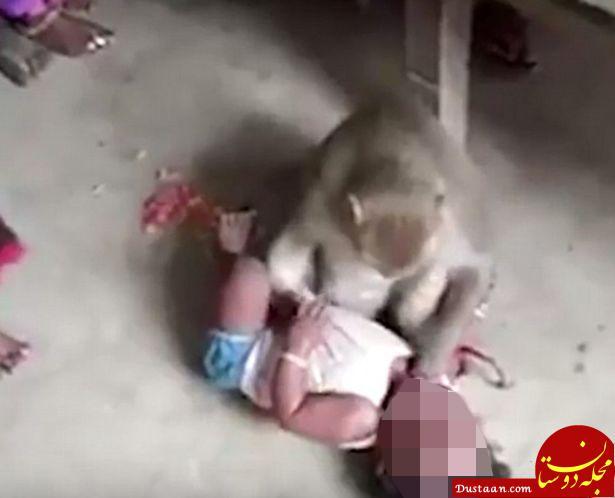 www.dustaan.com دختر 12 روزه ای که توسط یک میمون کشته شد! +عکس
