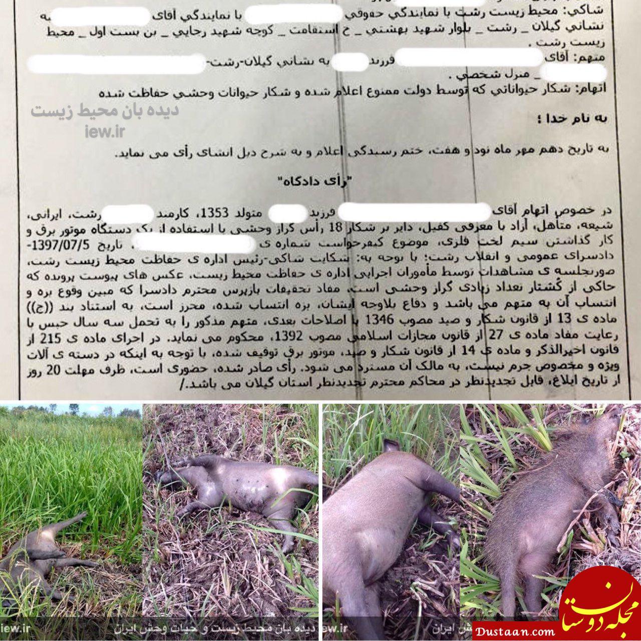 www.dustaan.com 3 سال زندان به دلیل کشتن خوک های وحشی در رشت