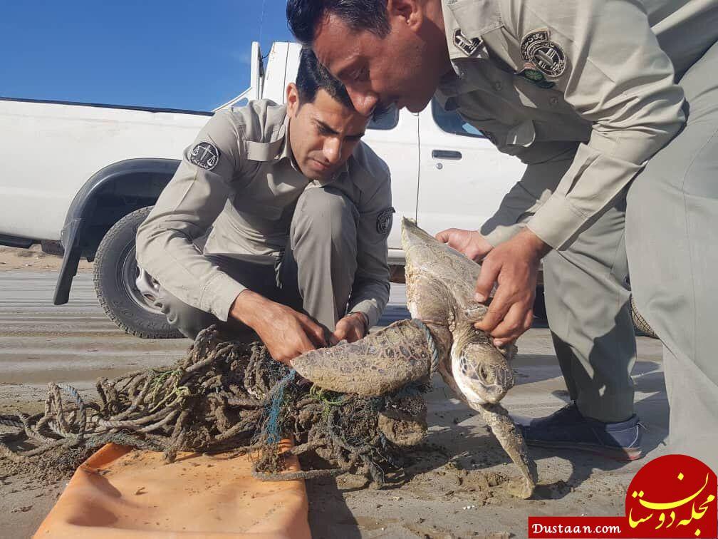 www.dustaan.com زباله های سرگردان بلای جان لاک پشت های دریایی +عکس