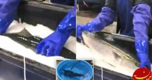 زنده شدن ماهی یخ زده در آب گرم! +عکس