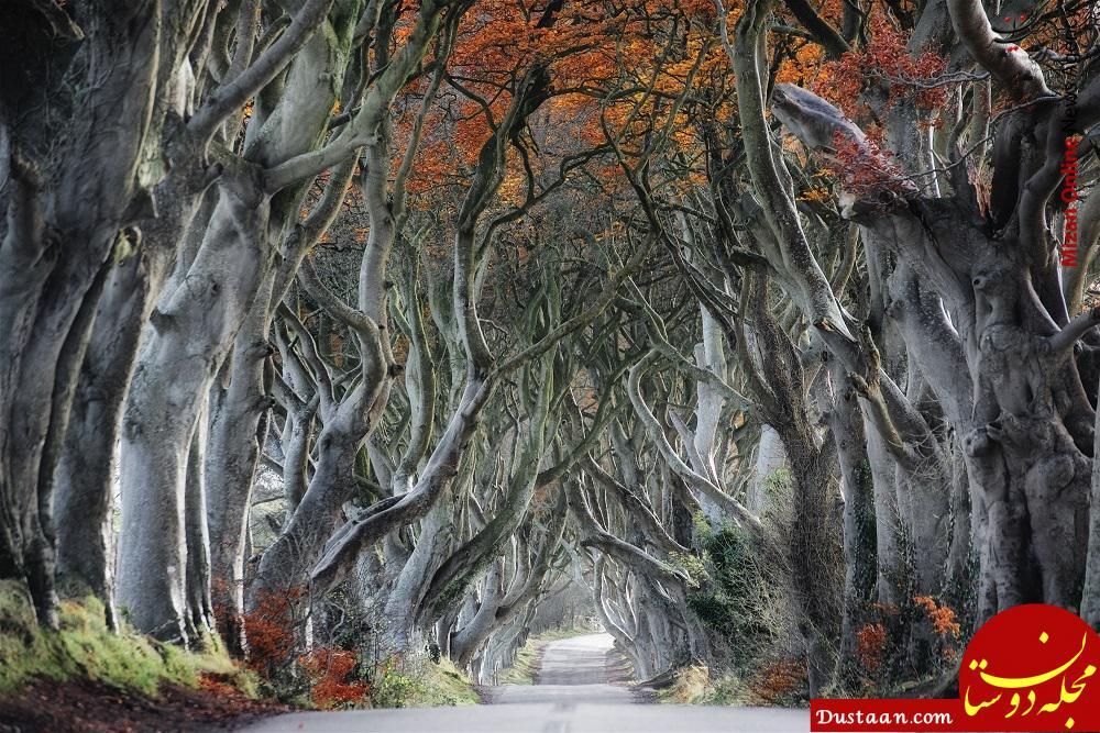 www.dustaan.com تصویری شگفت انگیز از جنگل مارپیچ انگلیس
