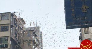 بارش پول از آسمان در هنگکنگ!  +عکس