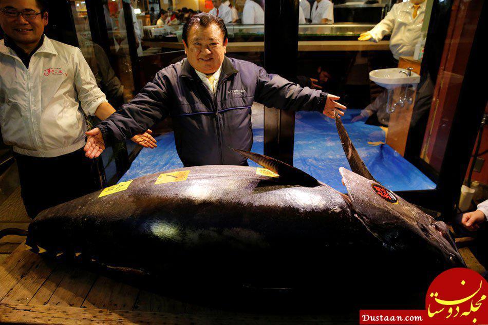 www.dustaan.com تاجر ژاپنی گرانترین ماهی جهان را خرید! +عکس