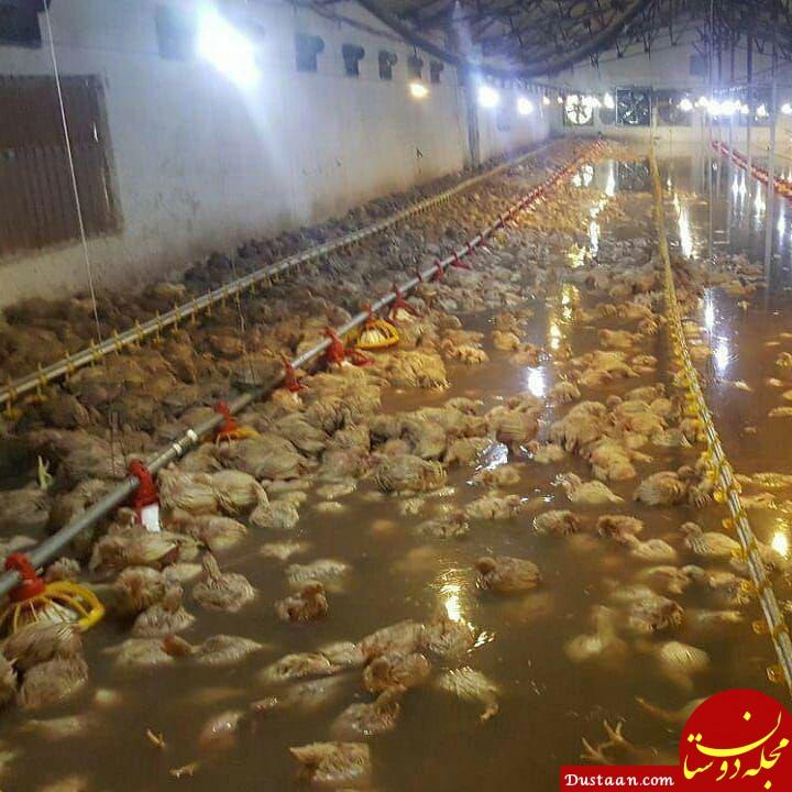 www.dustaan.com استخر مرغ!