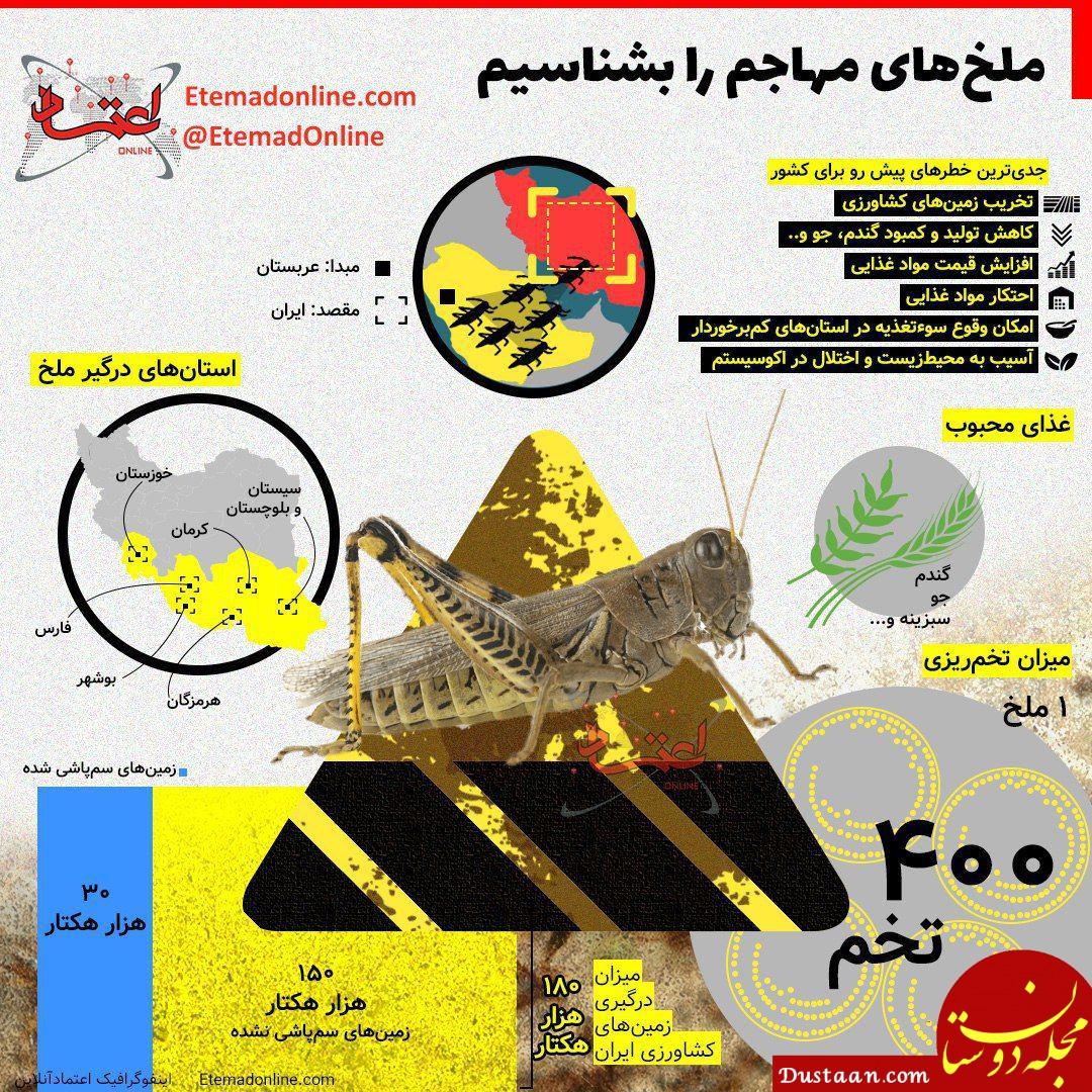 www.dustaan.com ملخ های مهاجم را بشناسیم