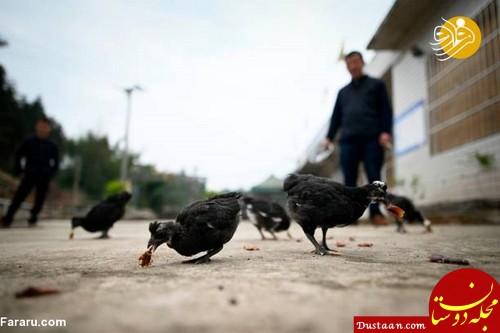 www.dustaan.com سود میلیاردی از طریق پرورش سوسک ! +عکس