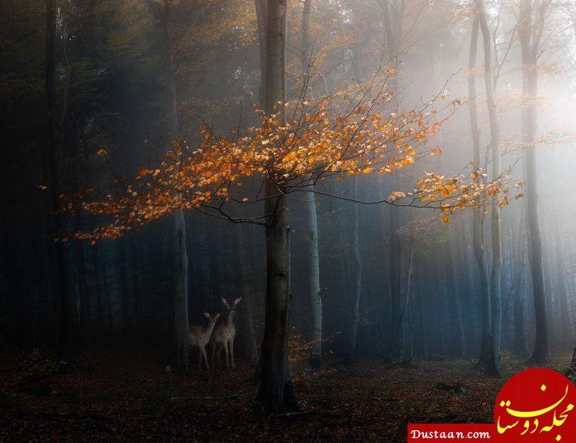 www.dustaan.com عکس روز به انتخاب نشنال جئوگرافیک: لحظه ای آرام؛ بلغارستان
