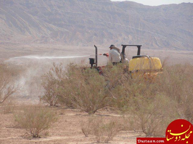www.dustaan.com مبارزه با ملخ ها در ۵۰ کیلومتری تهران