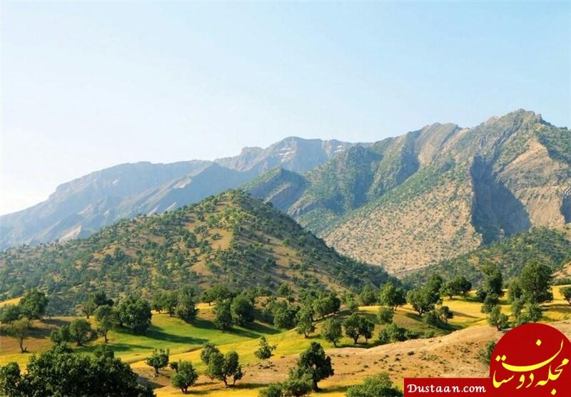 www.dustaan.com کاشت تریاک در جنگل های فارس