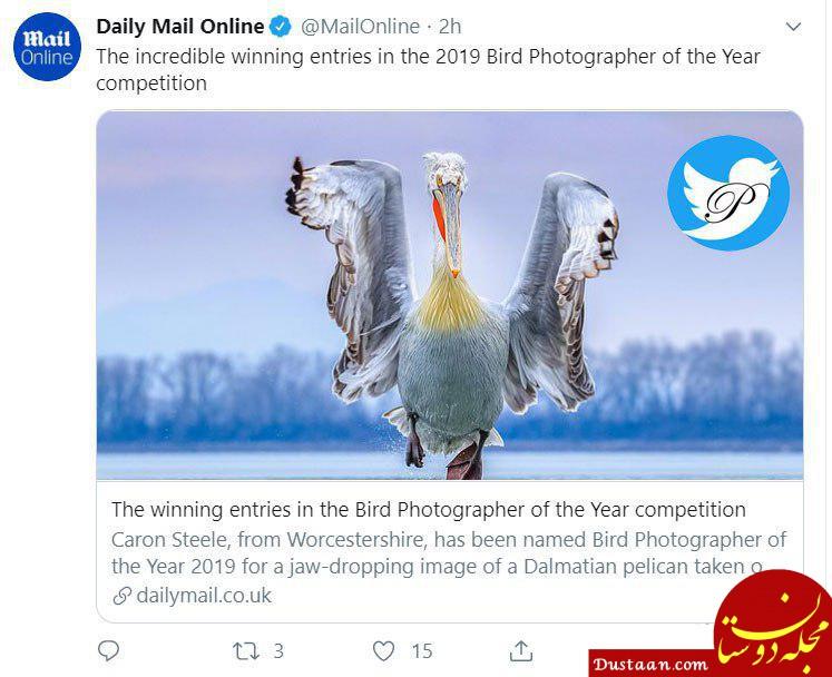 www.dustaan.com عکاس سال دنیای پرندگان 2019 مشخص شد +عکس