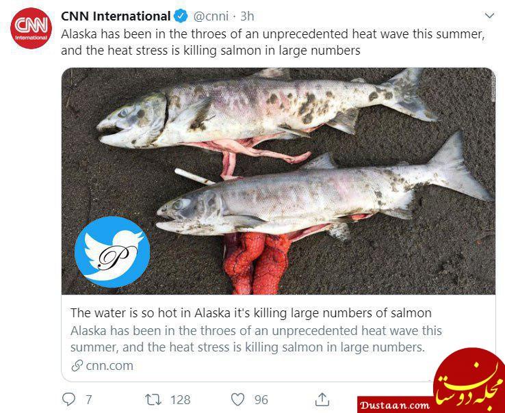www.dustaan.com مرگ هزاران ماهی در آلاسکا بخاطر گرمای بی سابقه