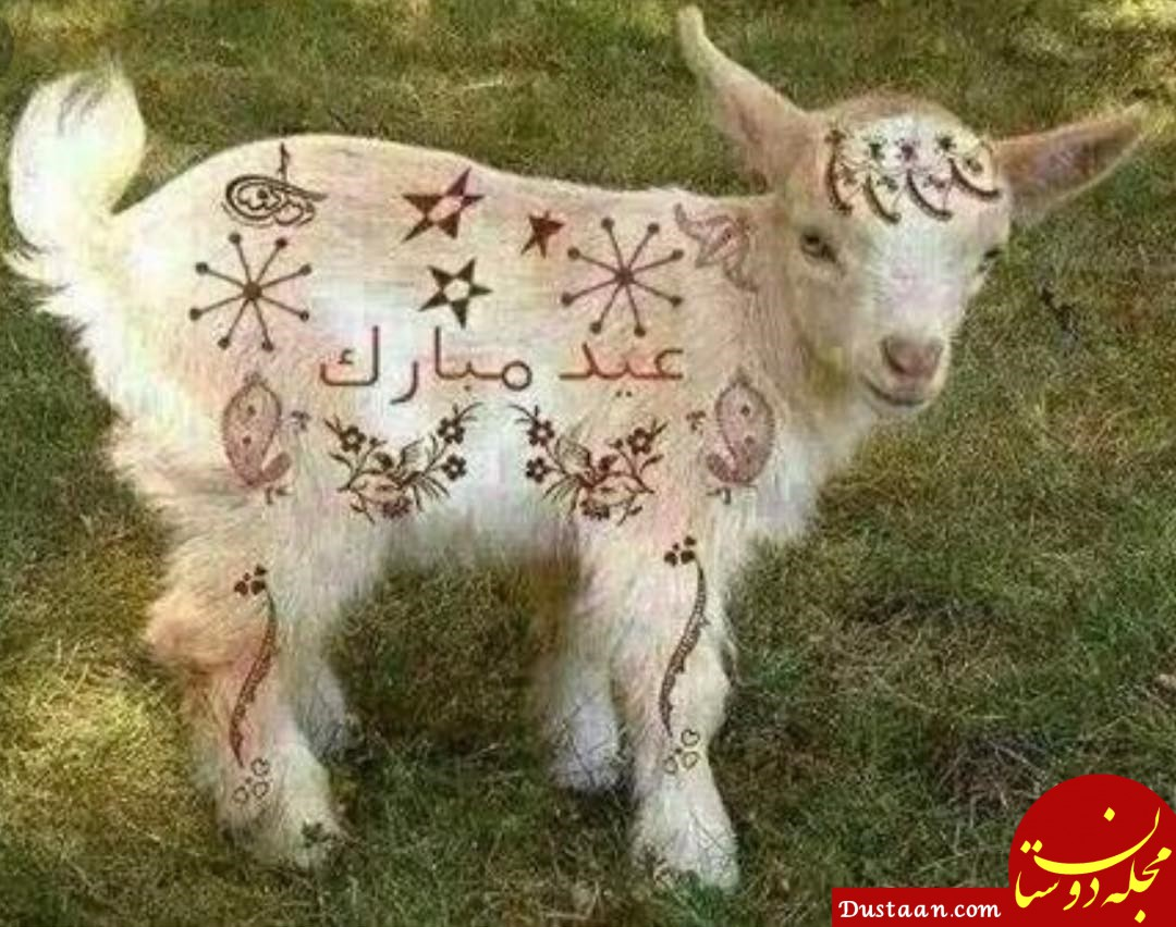 www.dustaan.com پیام تبریک عید قربان / جملات کوتاه و زیبا برای تبریک عید قربان