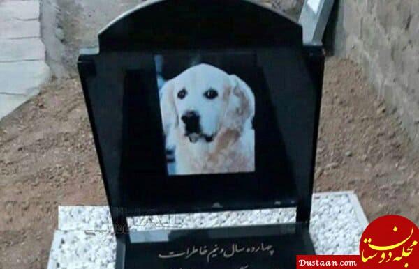 www.dustaan.com دستگیری کسانی که لاشه سگ را در مسجد دفن کردند +عکس