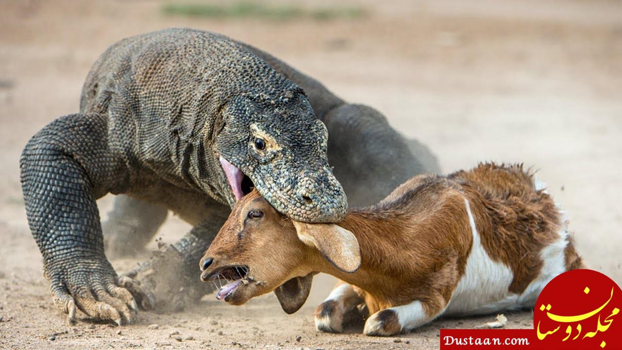 www.dustaan.com ۱۴ اگوست (۲۳ مرداد) مصادف با روزجهانی مارمولک !