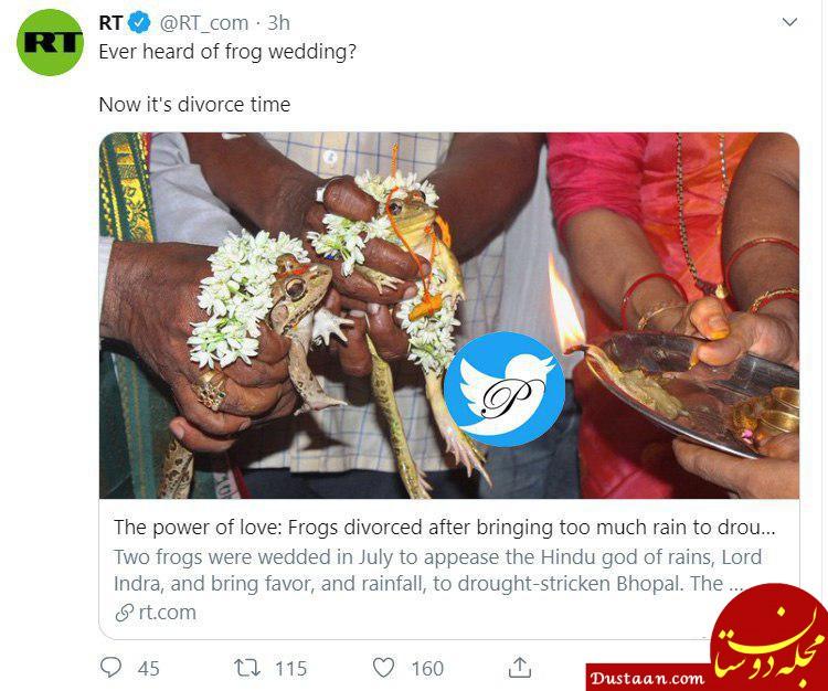 مراسم عجیب طلاق دو قورباغه در هند! +عکس