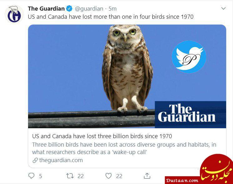 www.dustaan.com مرگ 3 میلیارد پرنده در آمریکا و کانادا