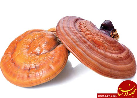 www.dustaan.com درمان پیسی با قارچ گانودرما