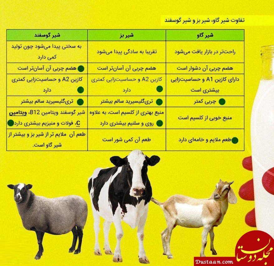 www.dustaan.com فرق شیر گاو با شیر بز و گوسفند در چیست؟