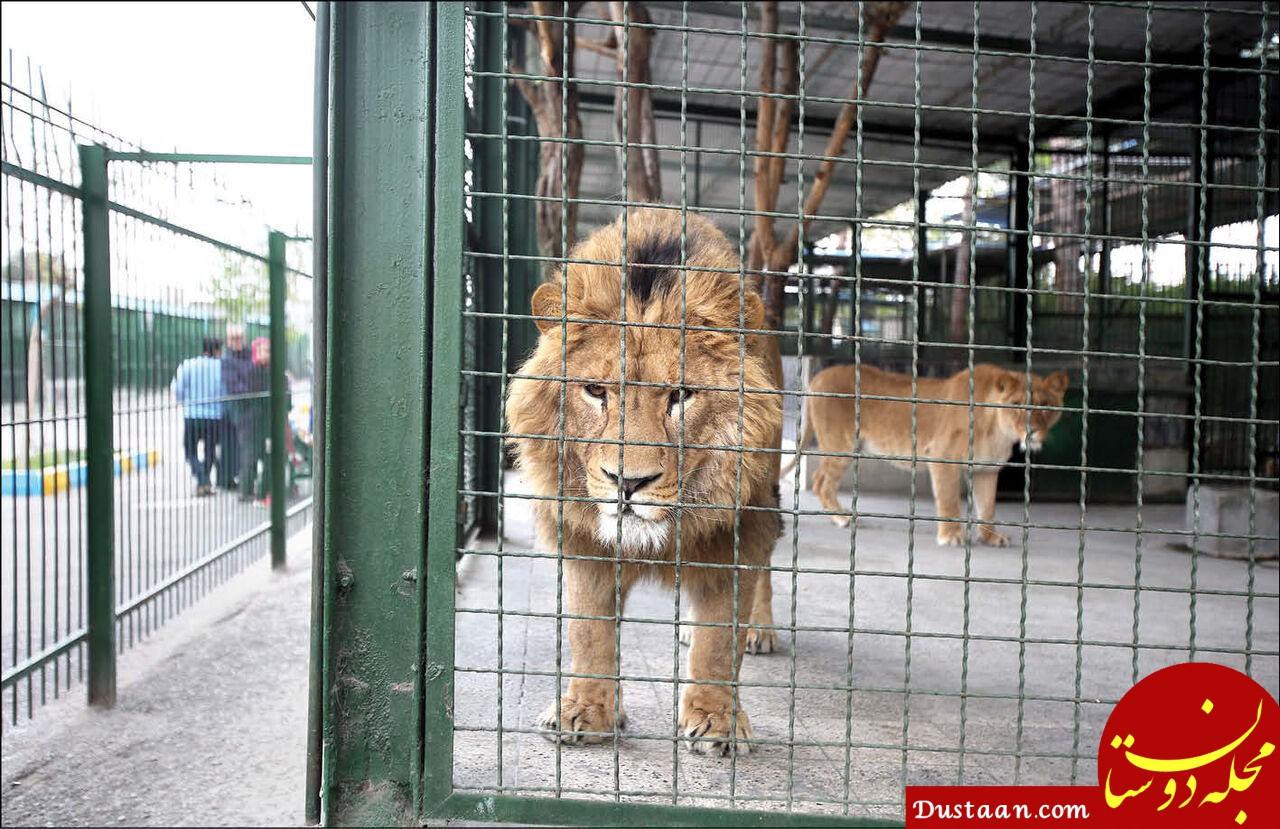 باغ وحش مشهد در صورت عدم اجرای دستورالعمل زیست محیطی ۳۰ آذر تعطیل می شود