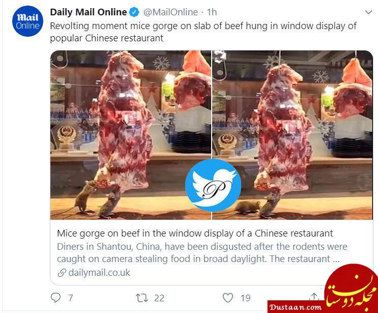 www.dustaan.com جنجال موش ها در رستوران مشهور چینی! +عکس