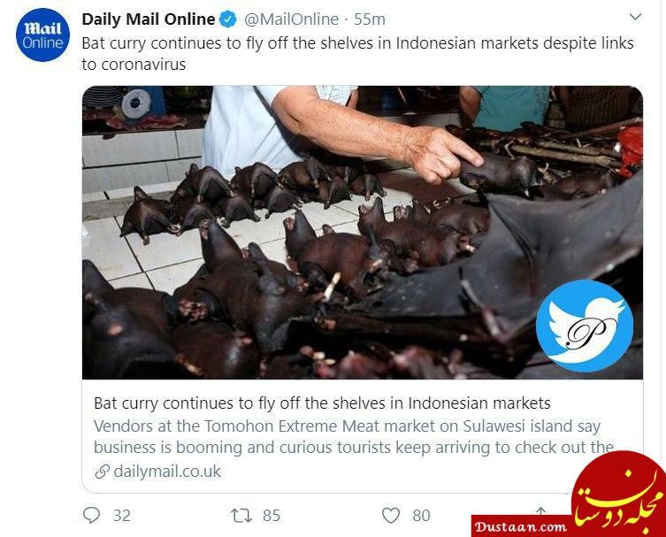 www.dustaan.com «کاری خفاش» غذای محبوب در اندونزی! +عکس