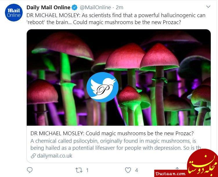 ریبوت کردن مغز با قارچ جادویی! +عکس