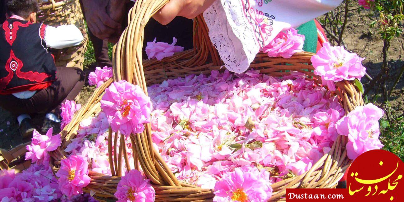 www.dustaan.com خواص گلاب | تاثیر گلاب برای اعصاب ، استرس ، یبوست ، لاغری و ...