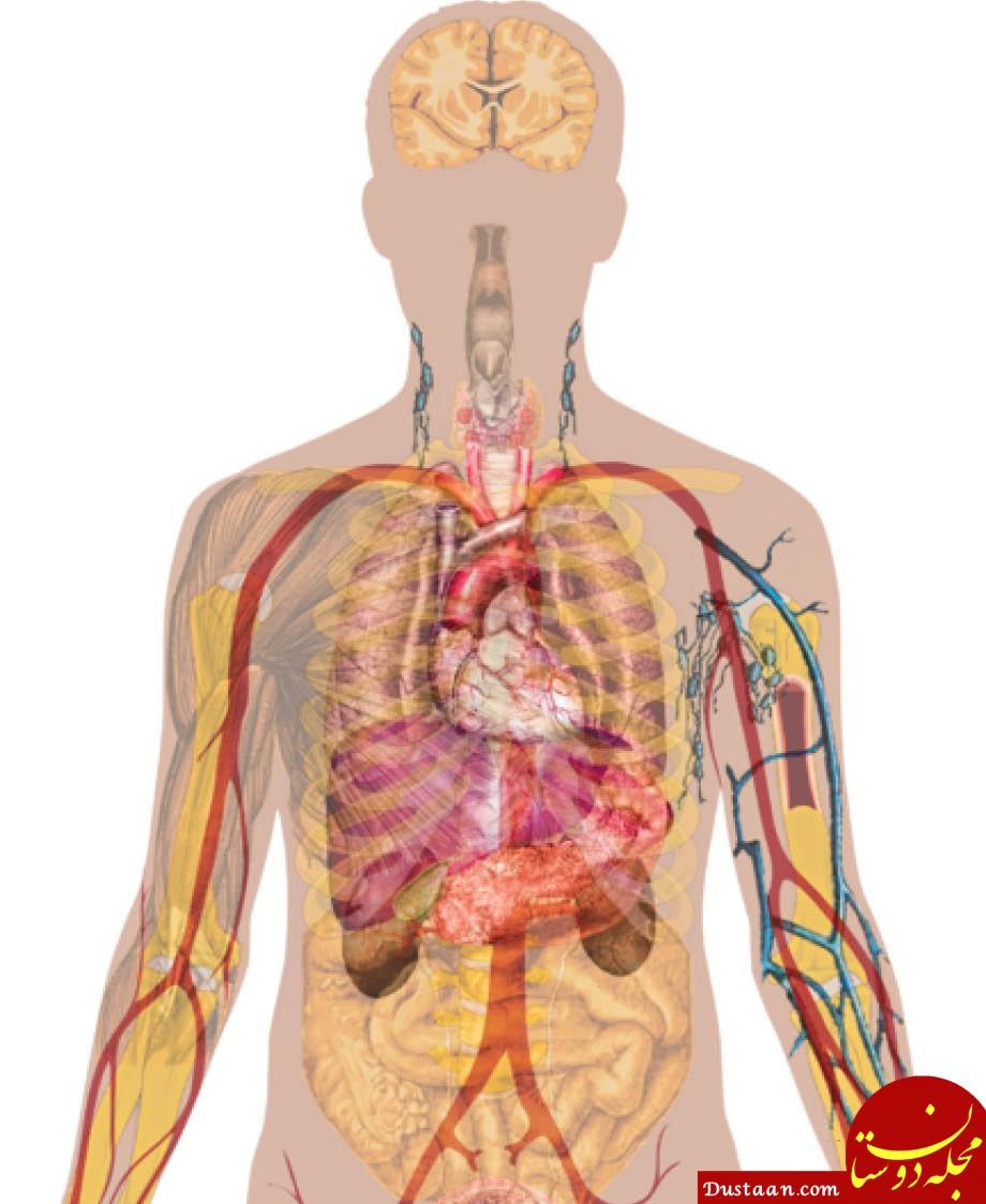 انسان بدون این اندام ها نیز می تواند زنده بماند! +عکس