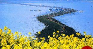 شکافته شدن دریا در کره جنوبی! +عکس
