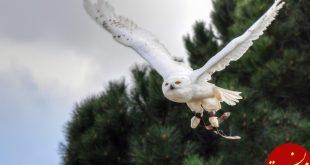 کشف دلیل عدم انقراض پرندگان در 66 میلیون سال پیش
