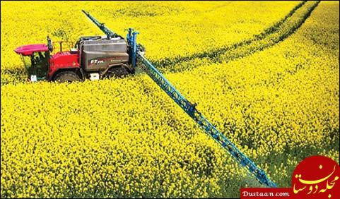 کشور توان خودکفایی در تولید دانه های روغنی را ندارد؟