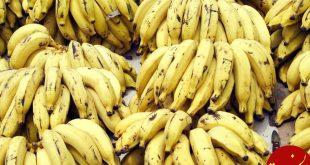 واردات انحصاری، عامل افزایش قیمت موز