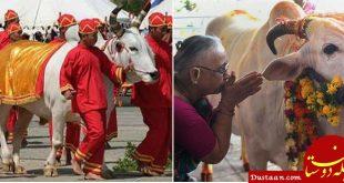 آزمون سراسری سنجش میزان گاوشناسی در هند!