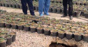 ابعاد جدید جنایت در گلخانه ! +عکس