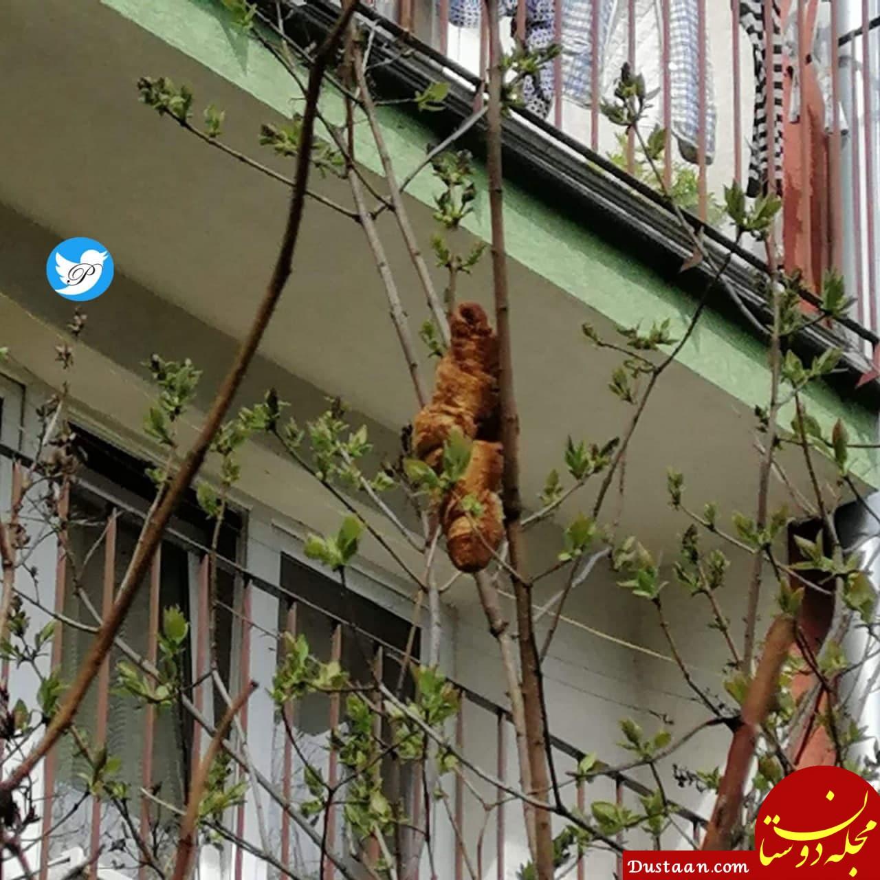 حیوان بی سری که سوژه رسانه ها شد! +عکس
